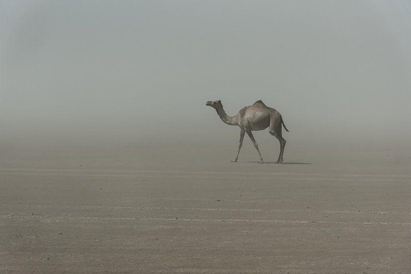 Eenzame kameel in de woestijn in Afrika | Ethiopië van Photolovers reisfotografie