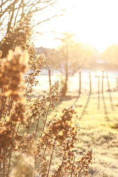 Blumen in der Morgensonne von Elien Voets