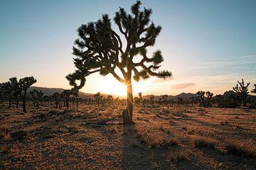 Silhouettes dans le désert sur