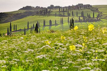 Cypressenlaan, Toscane, Italië van Markus Lange