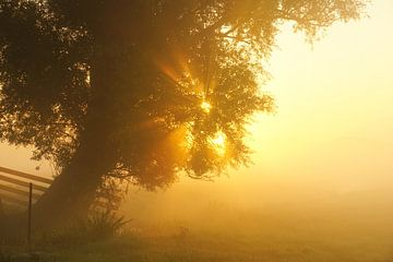 Zonnestralen sur Dirk van Egmond