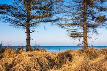 Baltic Sea coast near Graal Mueritz, Germany van Rico Ködder