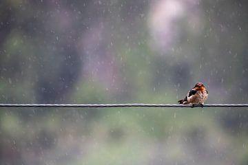 Boos Vogeltje van Femke Ketelaar