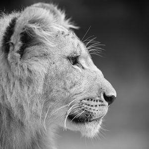 Afrikanische Löwenjunge in Schwarz-Weiß von Patrick van Bakkum