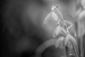 bloemen part 50 van Tania Perneel