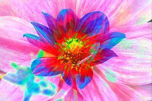 Bunt , blühende  Dahlie,abstrakt,Blume