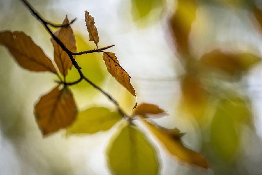 Herfstbladeren van Gonnie van de Schans
