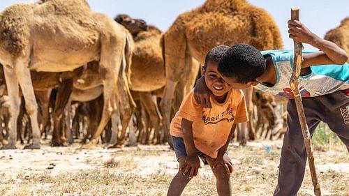 Broers in woestijn met kamelen (Tunesië)