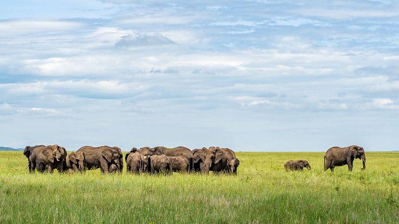 Elefantenherde von Mathias Möller
