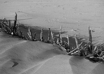 Driftwood van Le Mistral