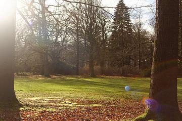 Bos open plek in het zonlicht van Ostfriesenfotografie
