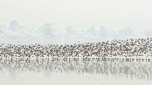 Vogeltrek van