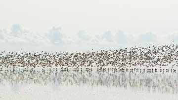 Vogeltrek sur Art Wittingen