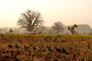 Landschap in Noord Benin in het land van de Somba