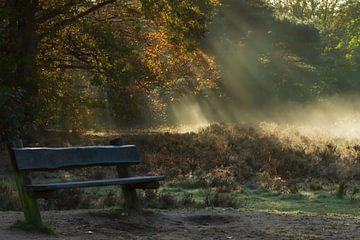 Bank im Wald bei Nebel von Frits Hogewoning