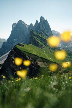 Seceda met alpenbloemen in Zuid-Tirol van road to aloha
