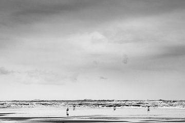 Möwen an der Nordsee von Linsey Aandewiel-Marijnen