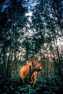Buffel von Rubin Versigny