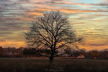 kleurrijke winter van Roland's Foto's
