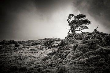 Landschap met door wind vervormde boom van Marcel Bakker