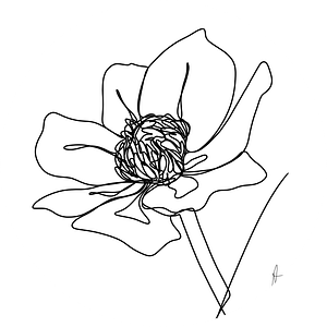 One line drawing Boterbloem van Ankie Kooi