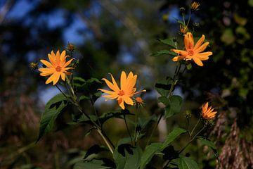 Bloemen van Thomas Jäger