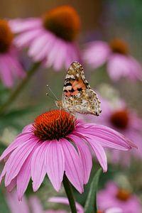 Distelvlinder op een bloem zonnehoed van Jacqueline Volders