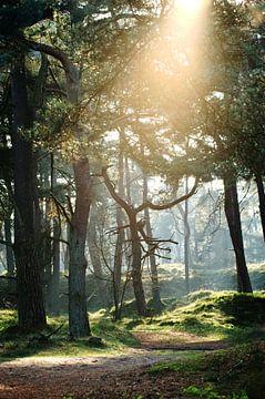 Waldweg von Bianca Verweij
