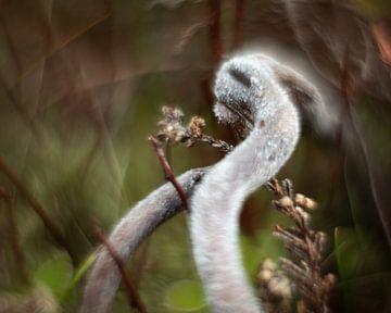 Heide sur Paul Glastra Photography