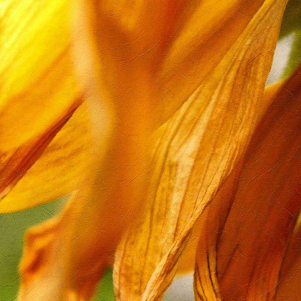 Sunflower 2021 von Andreas Wemmje