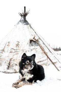 Hund in Sibirien von Milene van Arendonk