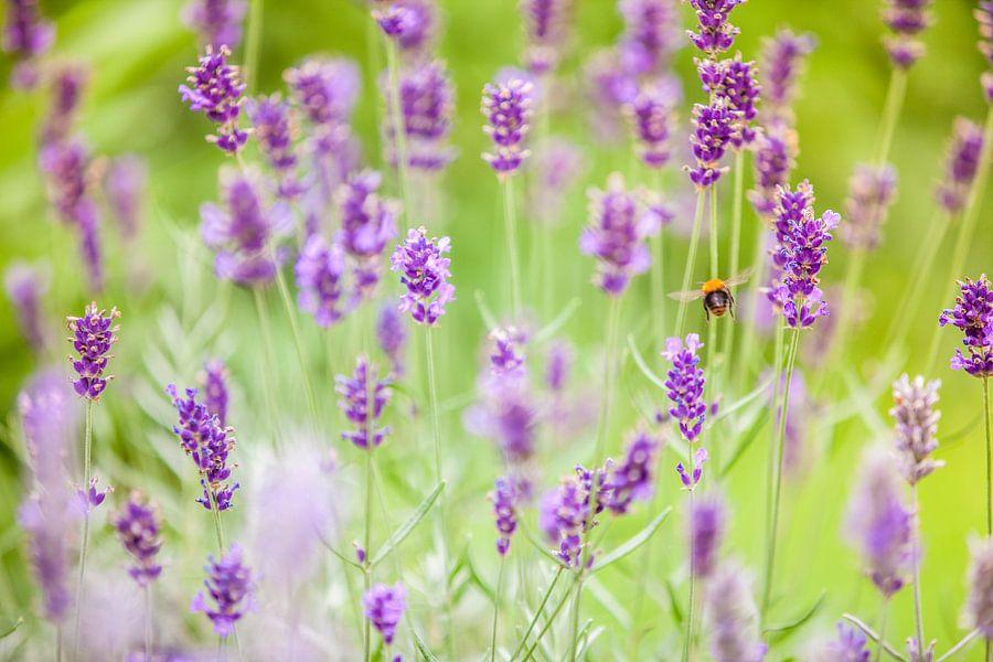 Bij in lavendel van Shoots by Laura