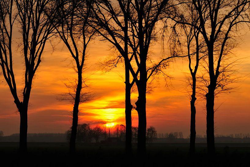 Herfst Zonsondergang achter de bomen van Sjoerd van der Wal Fotografie
