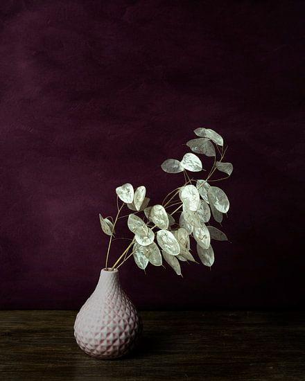 Judaspenning stilleven, aubergine