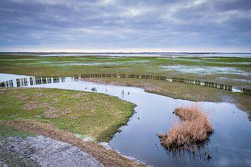 De uiterwaarden van het Lauwersmeer bij Suyderoogh van Evert Jan Luchies