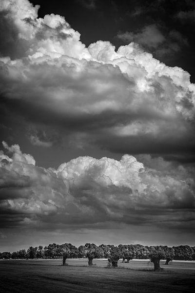 Willows and clouds II (monochrome) (Schalkwijk, Utrecht) van Alessia Peviani