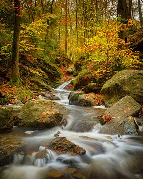Herbst in den belgischen Ardennen von Nando Harmsen