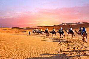 Kameel caravan trekt door de Sahara woestijn in Marokko bij zonsondergang