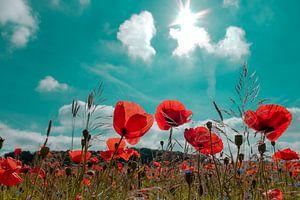 Poppys field