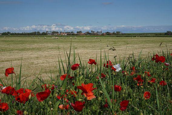 Klaprozen Texel  van Texel360Fotografie Richard Heerschap