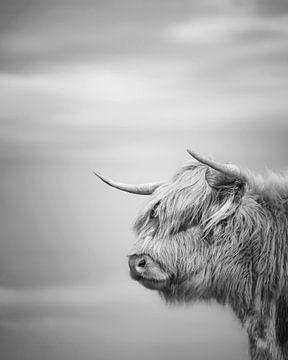 Schottischer Highlander in Schwarz und Weiß von Nicky Kapel