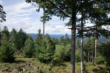 Uitzicht op door het bos op de bergen van Madelief Dekker