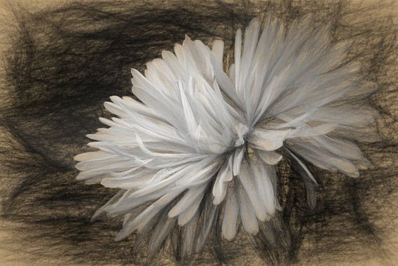 white van Yvonne Blokland