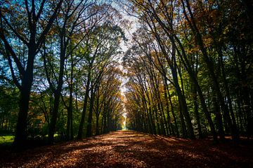 A path thru fall von Victor Droogh
