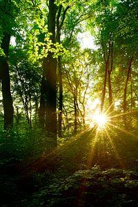 Idyllische zonsondergang in het bos