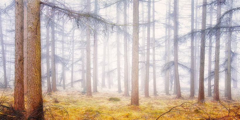 Bright forest van Rigo Meens