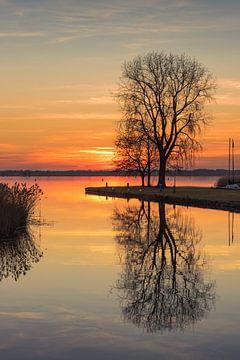 Boom aan het meer van Marga Vroom