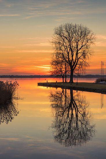 Boom aan het meer