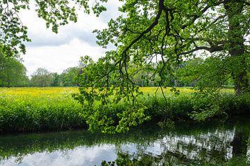 Buitenplaats Het Huys ten Donck: Blick auf das Feld. von Rick Van der Poorten