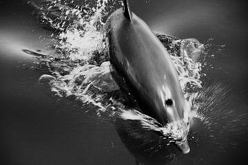 Rode Zee, Egypte - springende dolfijn van Robert-Jan van Lotringen